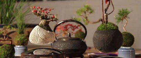 3.2.16 - Image ~ Bonsai Empire - 12687958_1667974546785796_7529065497542151180_n